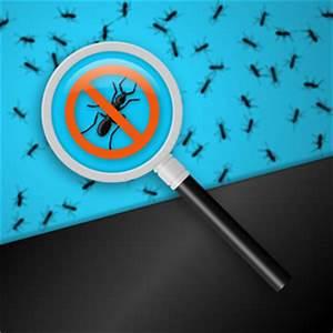 Ameisen Bekämpfen Im Garten : ameisenplage was tun die besten hausmittel gegen ameisen ~ Frokenaadalensverden.com Haus und Dekorationen