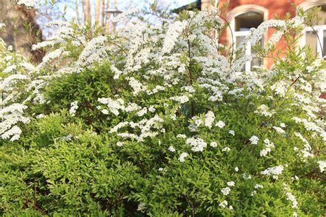 Blühende Gartensträucher  20 Winterharte Büsche Für