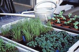 Wann Welches Gemüse Pflanzen Tabelle : wer den platz zum g rtnern sei es im garten auf dem balkon der terrasse und im ~ Frokenaadalensverden.com Haus und Dekorationen