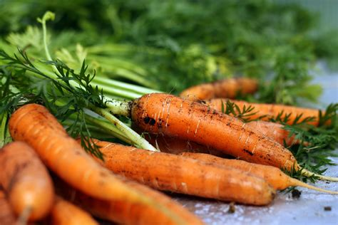 how to carrots from the garden how to harvest carrots 4 steps with pictures wikihow