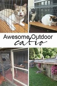 Outdoor Cat Jungle Gym | Cuckoo4Design