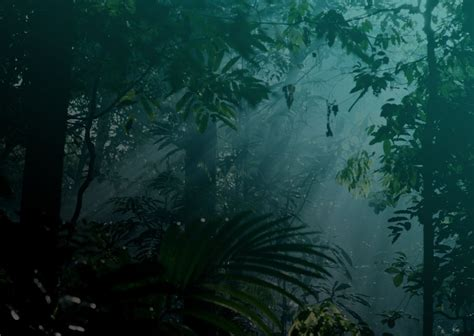 peaceful jungle night audio atmosphere