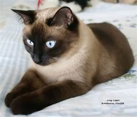 cat breed all the beautiful cat breeds in the world all2need