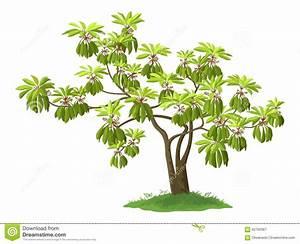 Plantes Exotiques D Intérieur : plante verte exotique d int rieur l 39 atelier des fleurs ~ Melissatoandfro.com Idées de Décoration