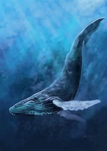 Humpback Whale by endzi-z on DeviantArt
