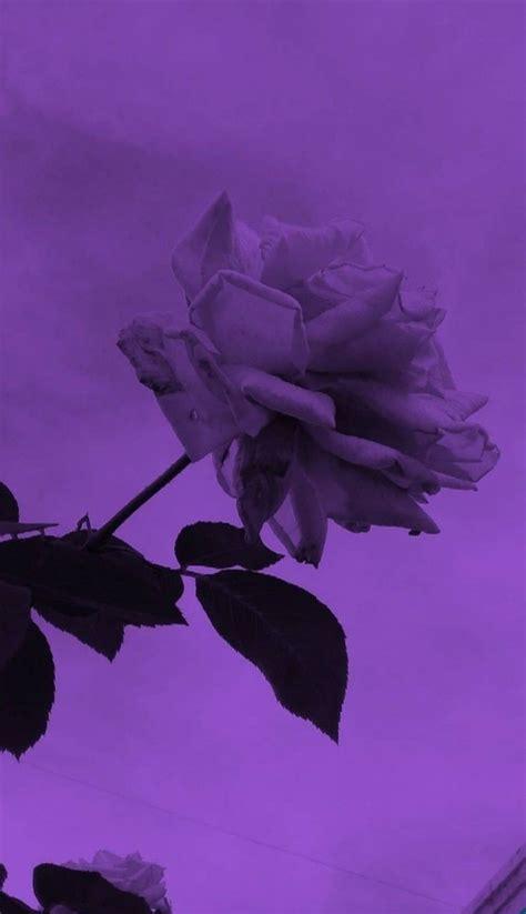 pin by on hintergrund purple aesthetic