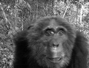 World's Largest Camera Trap Study Reveals Declining Mammal ...
