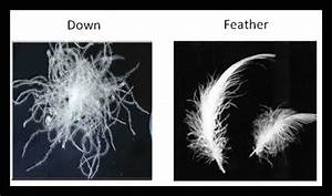 What is the difference between down and feather for Duck or goose feather pillows which is better