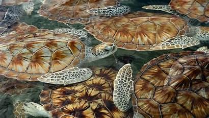Sea Desktop Turtles Backgrounds Wallpapers