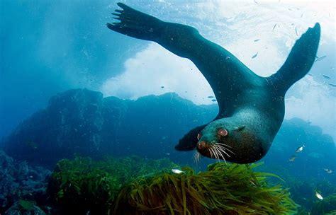 ausmalbilder ozean meereswelt meerestiere
