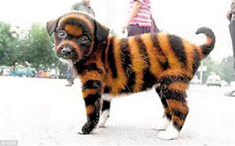 Chinese Street Vendors Paint Puppies With Toxic Tiger