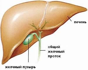 Чистка кишечника печени и почек