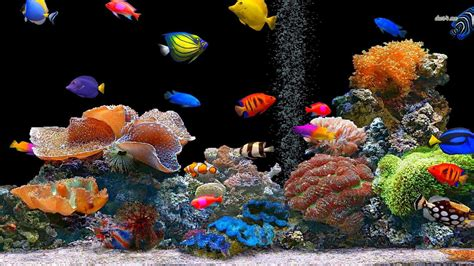3d Animal Wallpaper 3d Fish Wallpaper - fish wallpaper and background image 1366x768 id 475698