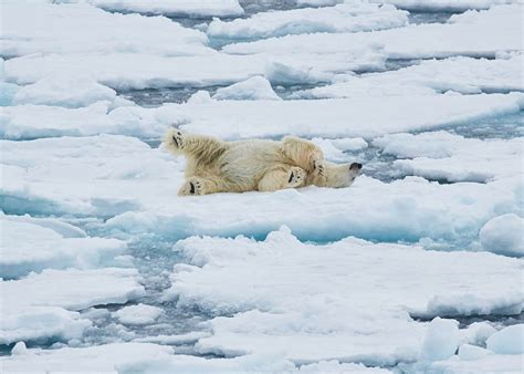 spitzbergen und nordost groenland arktis reisen