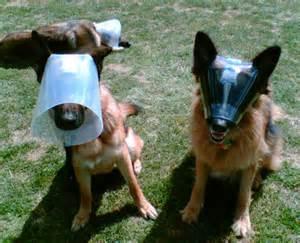 cat cone alternatives optivisor novaguard two more alternatives to