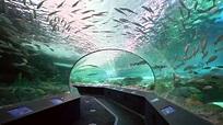 Ripley's Aquarium of Canada - YouTube