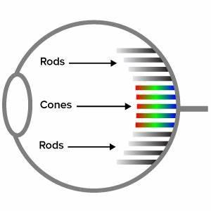Eyes Diagram Rods Cines : nn g usability week metrics memories and magic ~ A.2002-acura-tl-radio.info Haus und Dekorationen