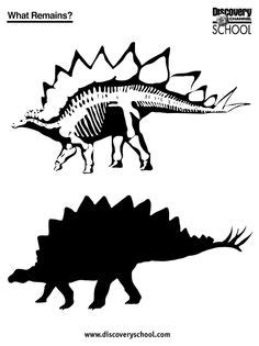 printable dinosaur facts  coloring page