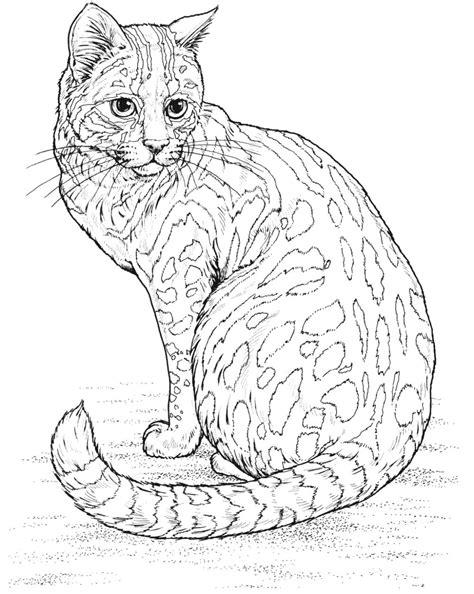 kumpulan gambar mewarnai kucing