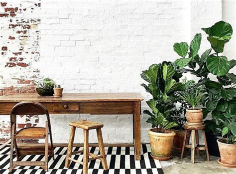 Super-versatile Indoor Plants For Sale In Geelong