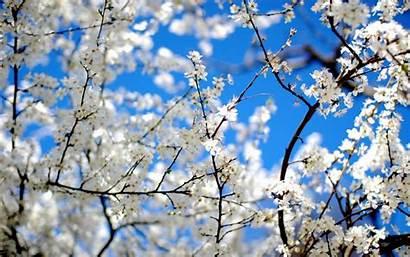 Spring Wallpapers Desktop Nature Season Achtergronden