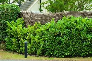 Garten Sichtschutz Pflanzen : sichtschutz im garten 22 raffinierte ideen anregungen ~ Watch28wear.com Haus und Dekorationen
