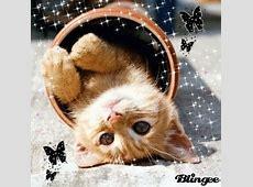 Süße Katze Bild #104265592 Blingeecom