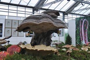 Botanischer Garten Augsburg Oktober by Pilzverein Augsburg K 246 Nigsbrunn E V