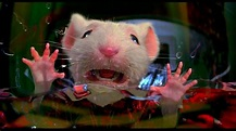 Stuart little stuck in washing machine | Stuart little ...