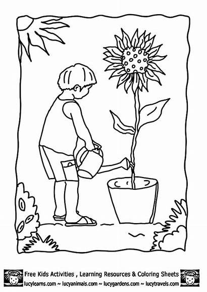 Coloring Pages Garden Clipart Vegetable Plants Growing
