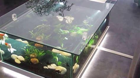 aquarium deau douce table aquarium amazone odyssee