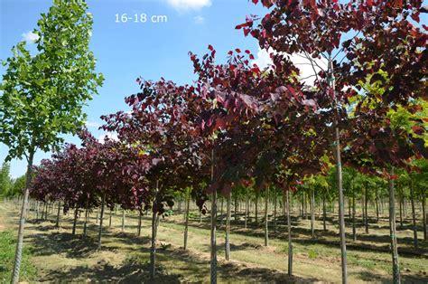 Klein Bleibende Bäume by Klein Bleibende B 228 Ume Pflanzen
