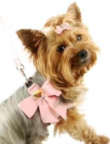 собака малина фото