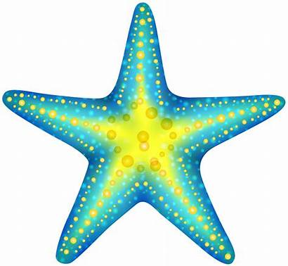Starfish Clip Clipartpng Clipart Link