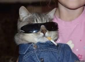 cool cats cool cat