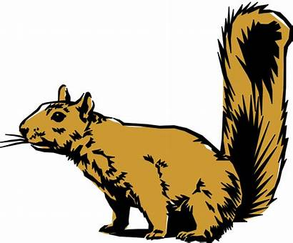 Clip Animals Clipart Animal Cliparts Squirrel Library