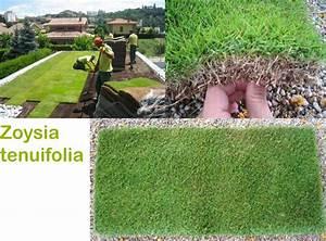 Gazon En Plaque : gazon zoysia tenuifolia jardin minute ~ Premium-room.com Idées de Décoration