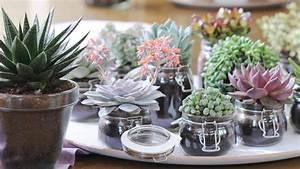 Plante Succulente Espèces Représentatives : la succulente une plante experte en survie ~ Nature-et-papiers.com Idées de Décoration