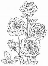 Coloring Roses Rose раскраски Flowers Flower Mandala Printable Sheets цветы розы раскраска рисунки Nature Bouquet Adult реалистичные Bouquets для Landscape sketch template