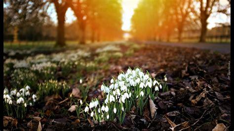 Zied sniegpulkstenītes....skaista melodija dvēselei! - YouTube