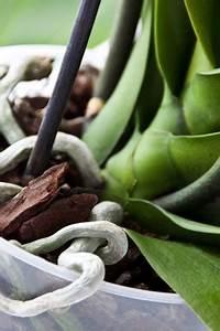 Orchideen Schneiden Video : orchideen umtopfen anleitung und hinweise zu luftwurzeln ~ Frokenaadalensverden.com Haus und Dekorationen