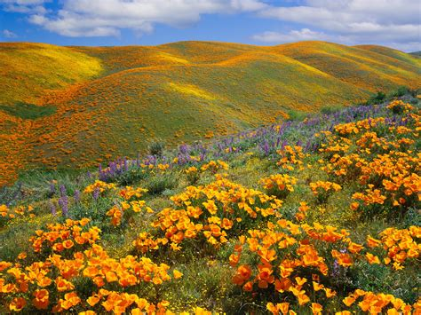 The Most Beautiful Places In California  Photos Condé