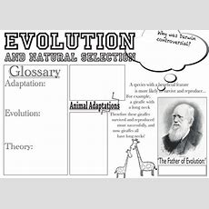 Evolution And Natural Selection Poster By Katielu