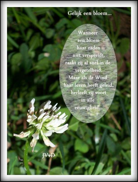 bloem gedichtje 25 beste idee 235 n over bloem citaten op pinterest vintage