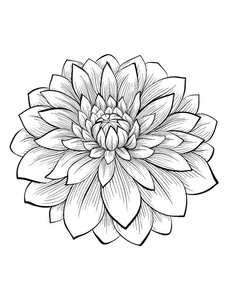 Dahlia : color one of the most beautiful flowers, From the