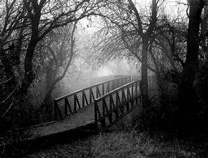 Beautiful Black And White Nature Picture HD Wallpaper ...
