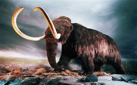 animales fantasticos mamut wallpapers