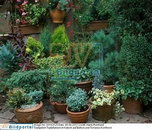 Winterharte Pflanzen Für Balkon : winterharte topfpflanzen terrasse details zu 0003162525 ~ Michelbontemps.com Haus und Dekorationen