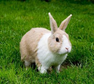 【兔同伴】認識家兔光譜