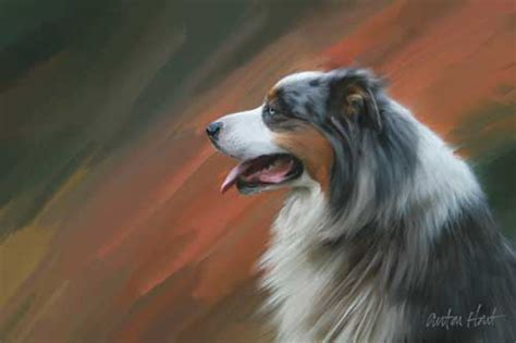share  australian shepherd art